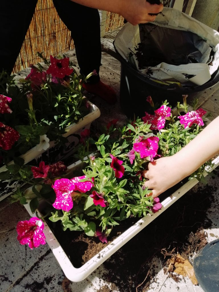 Presađivanje cvijeća sa djecom